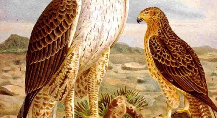 Arrábida Natural Park, The Fauna